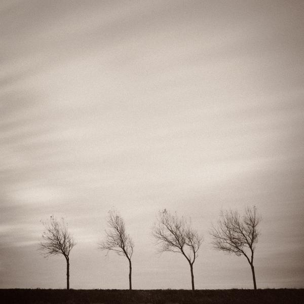 Four Trees by David Bowman [fineartamerica]