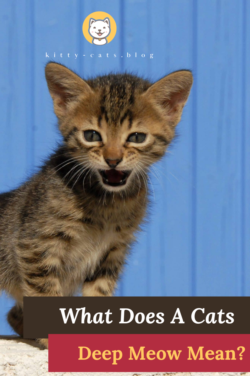 What Does A Cats Deep Meow Mean Do You Want To Know In 2020 Cats Cat Behavior Kitten Care