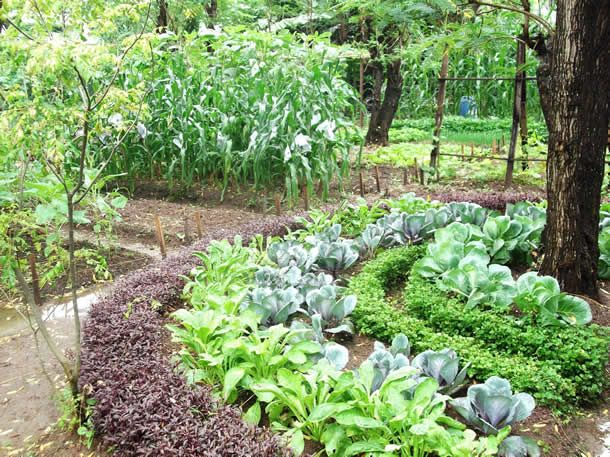 Home Garden Sri Lankan Biointensive Demonstration Garden  Garden  Pinterest