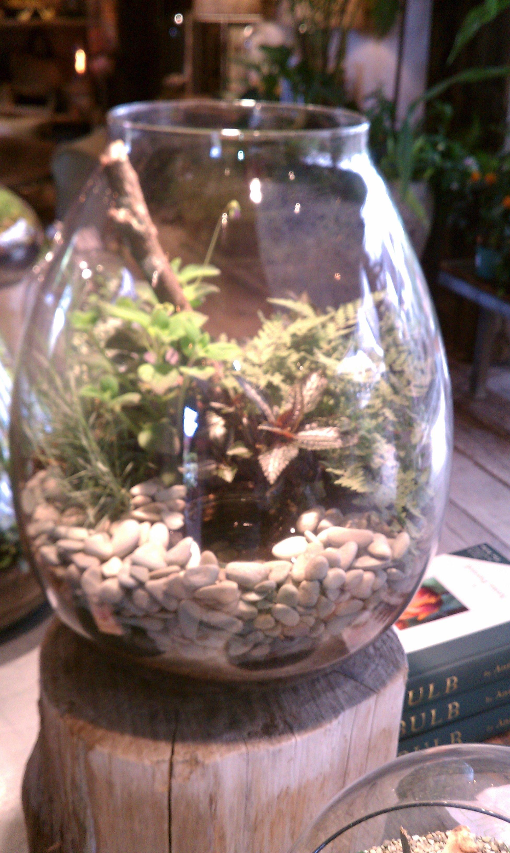 Wonderful terrarium at Terrain @ Styers