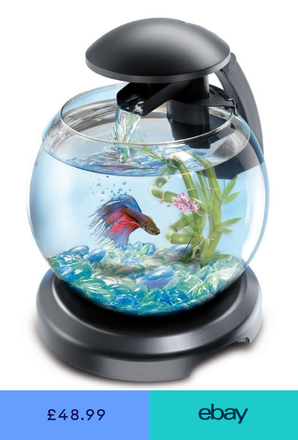 Tetra Cascade Globe Glass Fish Tank With Led Light Filter Bowl Aquarium Black Glass Fish Tanks Fish Tank Fish Tank Decorations