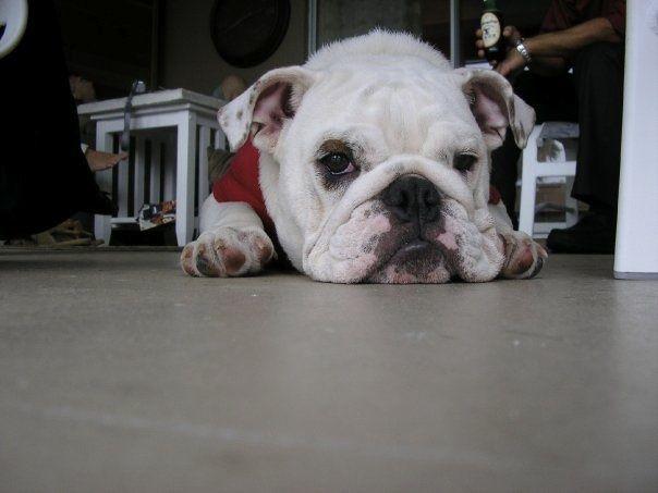 Baby Bessie