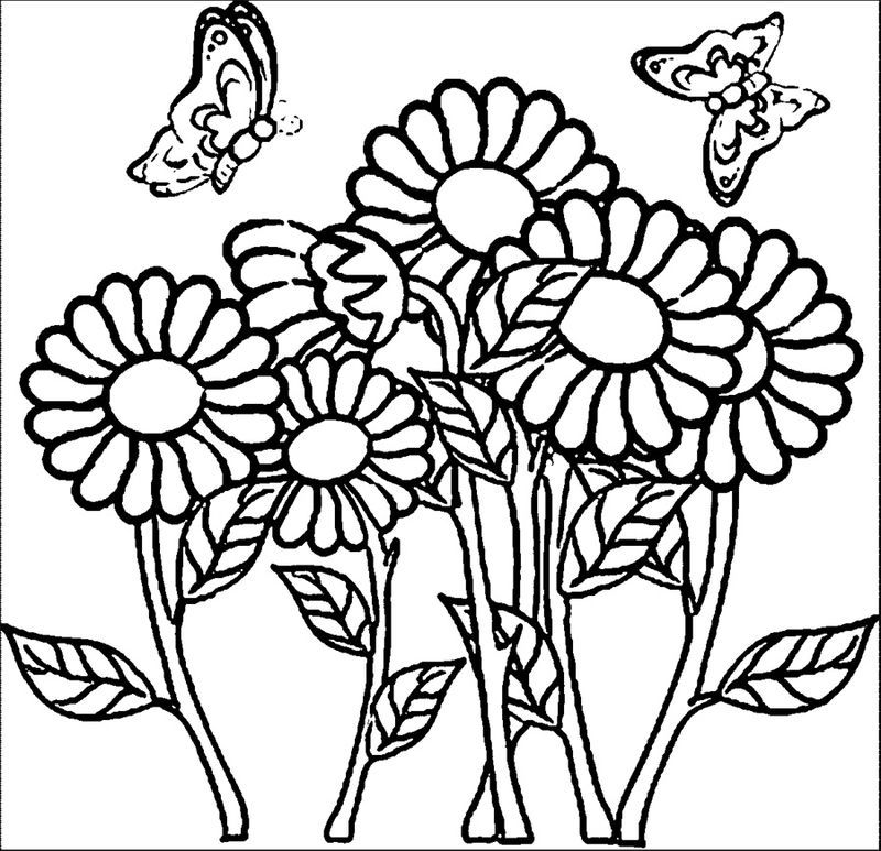 Butterfly And Flower Coloring Pages For Adults See the