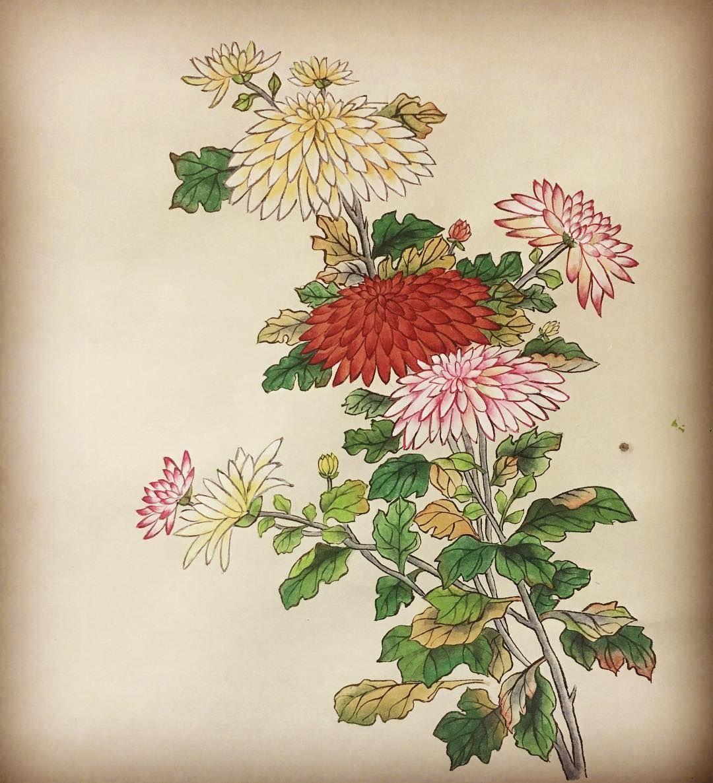 Google Search Botanical drawings, Korean art, Drawings