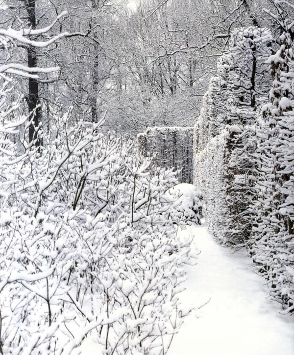 Snow in a Wirtz Garden