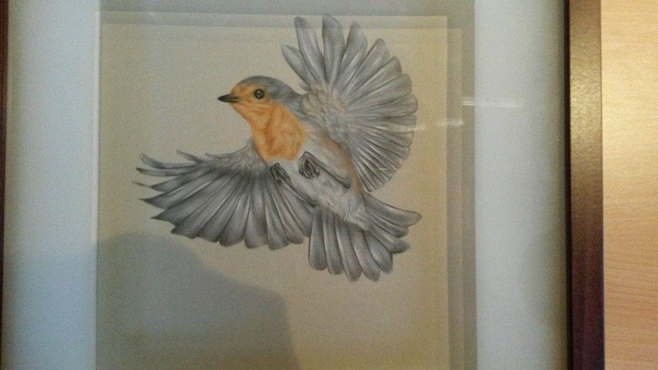 rotkehlchen im flug bird flying zeichnung drawing  vögel