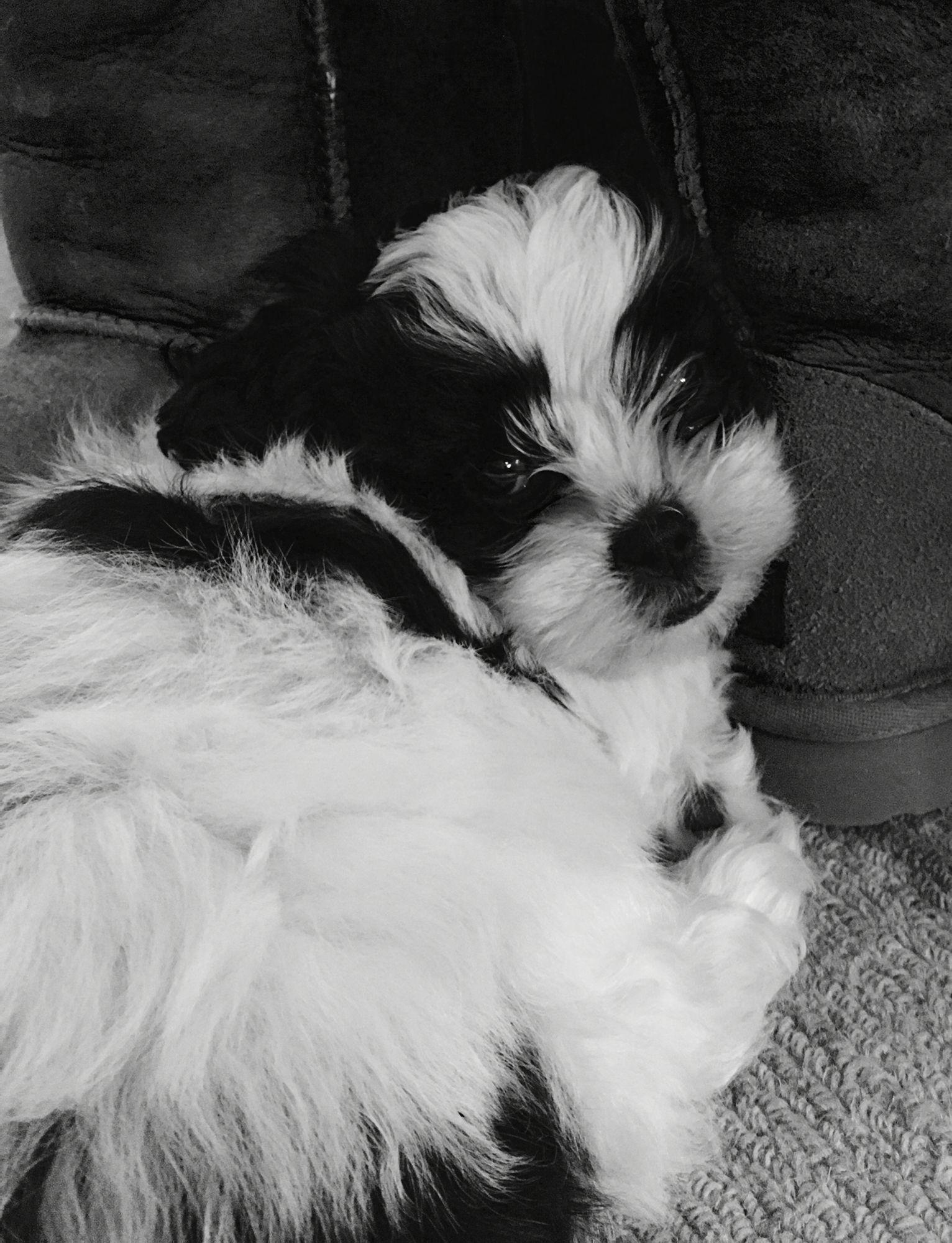 Hank!  Cutest. Puppy. Ever!!!