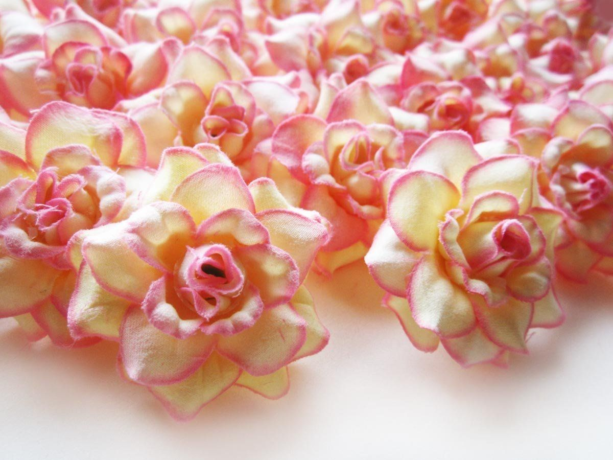 24 Silk Cream Pink Edge Roses Flower Head 175 Artificial
