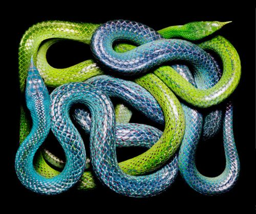 Inspired by...  Natural Colored Snakes