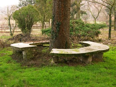 Maybe Pour Concrete For A Bench Under The Front Tree Bench
