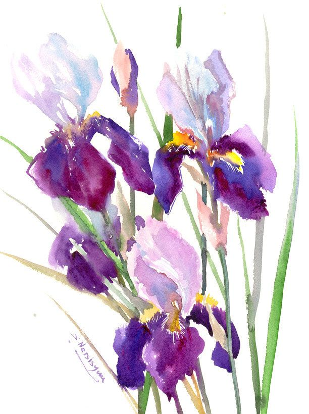 Irises Painting Original Watercolor Painting 12 X 15 In Garden