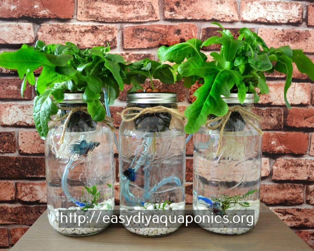 Aquaponics better homes and gardens hydroponic plants with fish