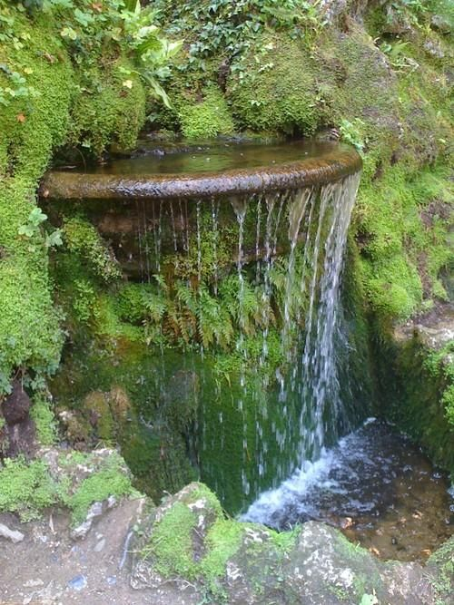 Moss and #Ferns surround a small water feature at the Gardens of