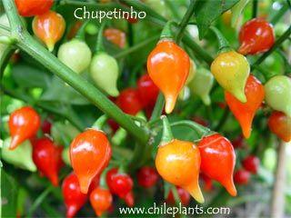 Chupetinho Pimentas Especiarias Frutas