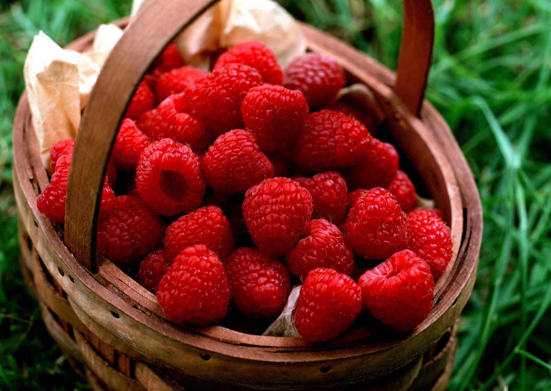 When to prune blueberries  Himbeere  Raspberry  Obst  Früchte  Fruit  Pflanzen Himbeere
