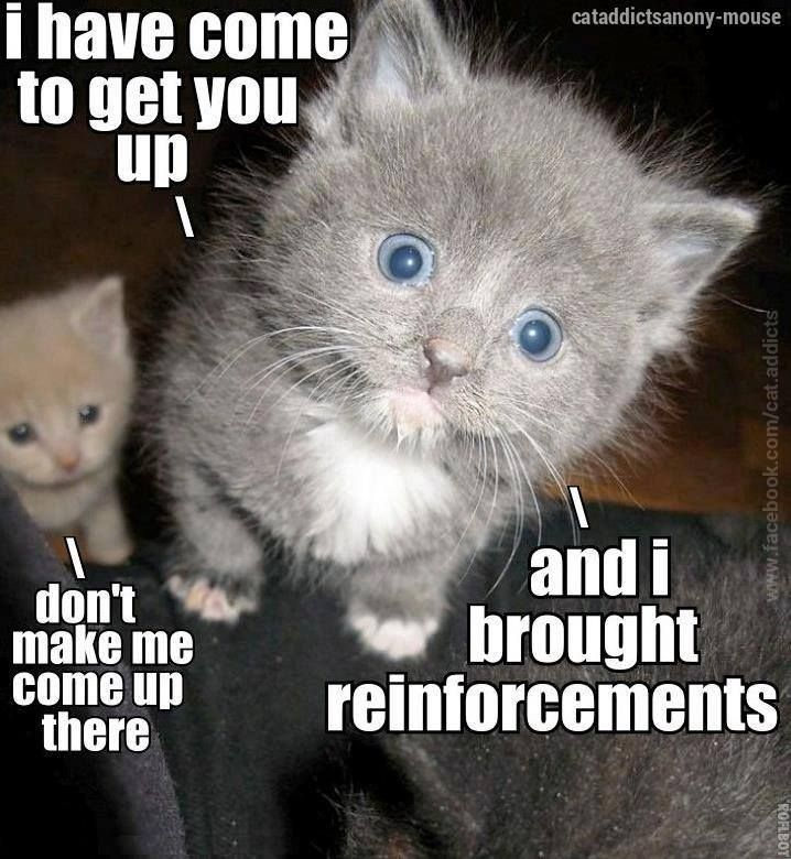 I Have Reinforcements Cute Animals Funny Animal Pictures