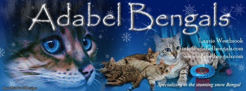 Adabel Bengals Cattery | ClubSearch