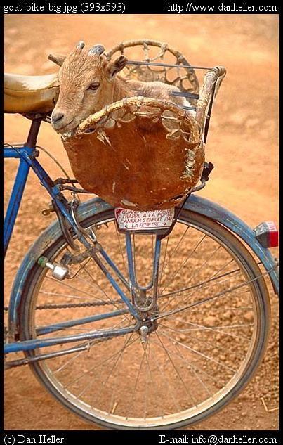 Goat Transport, Burkina Faso by Dan Heller