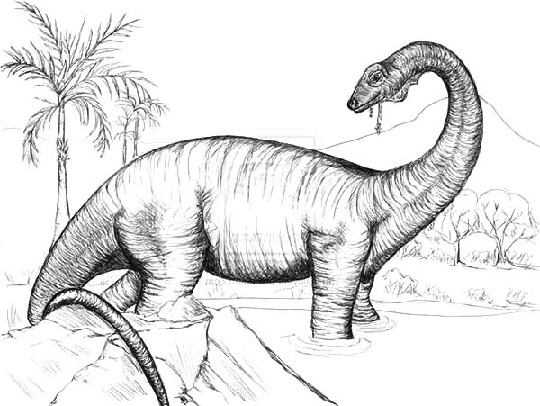 Pin On Diplodocus Coloring Pages