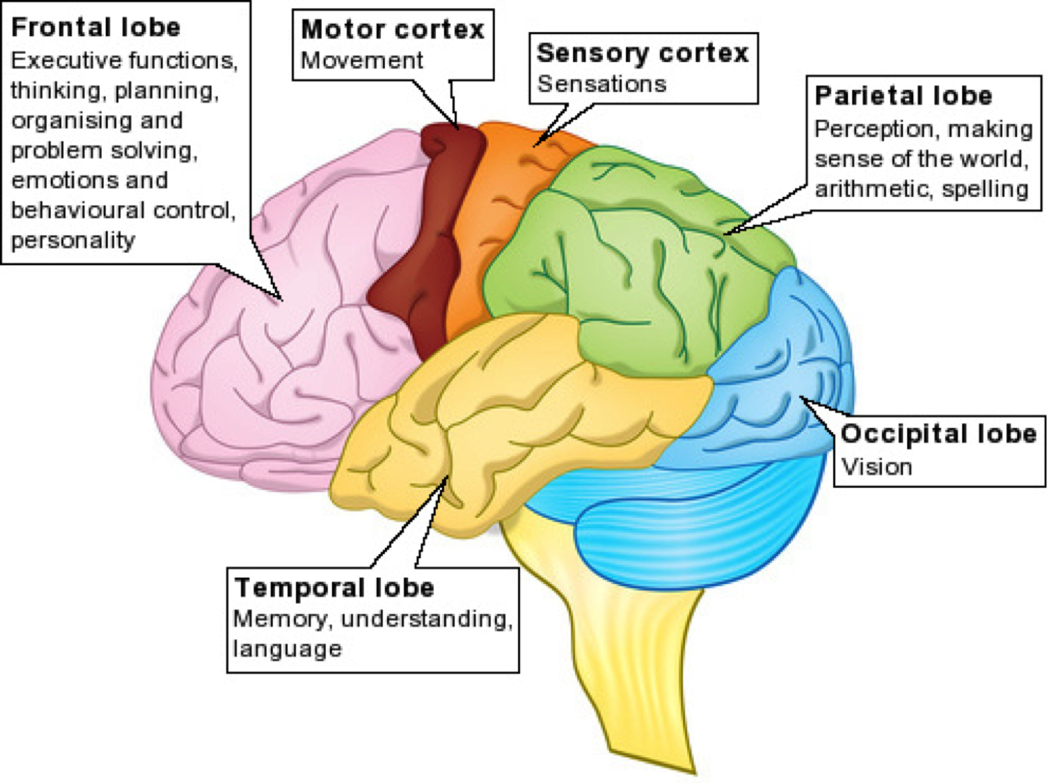 Principles of Cortical Function