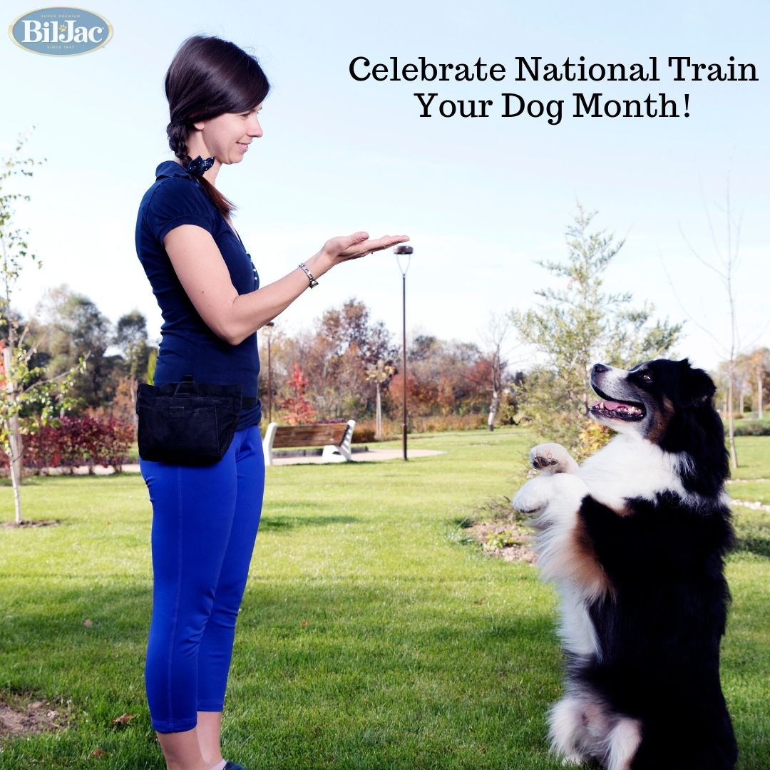 What New Tricks Will You Teach Your Pooch This Month Don T Forget