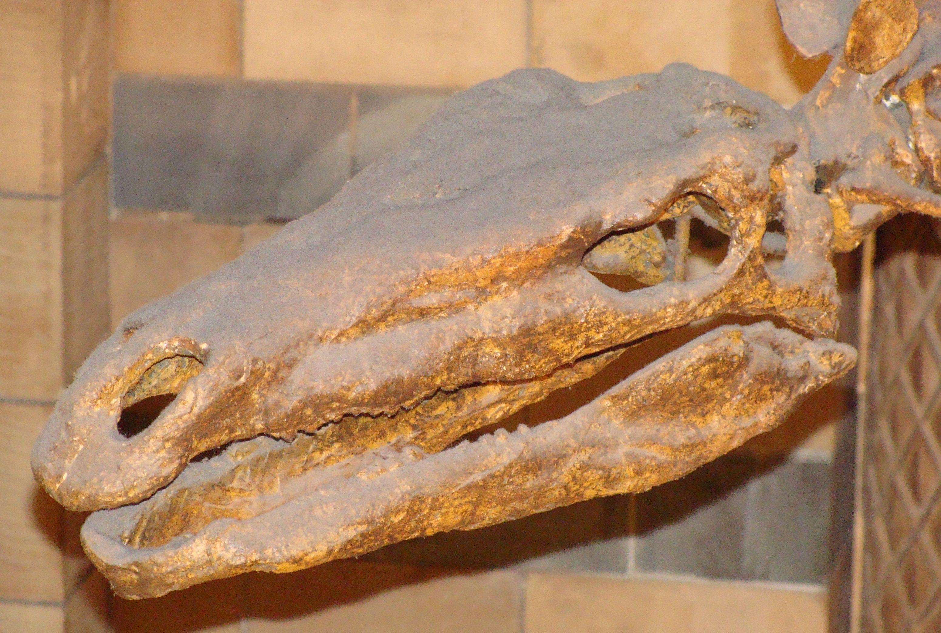 Dinosaur Bones   American Museum of Natural History