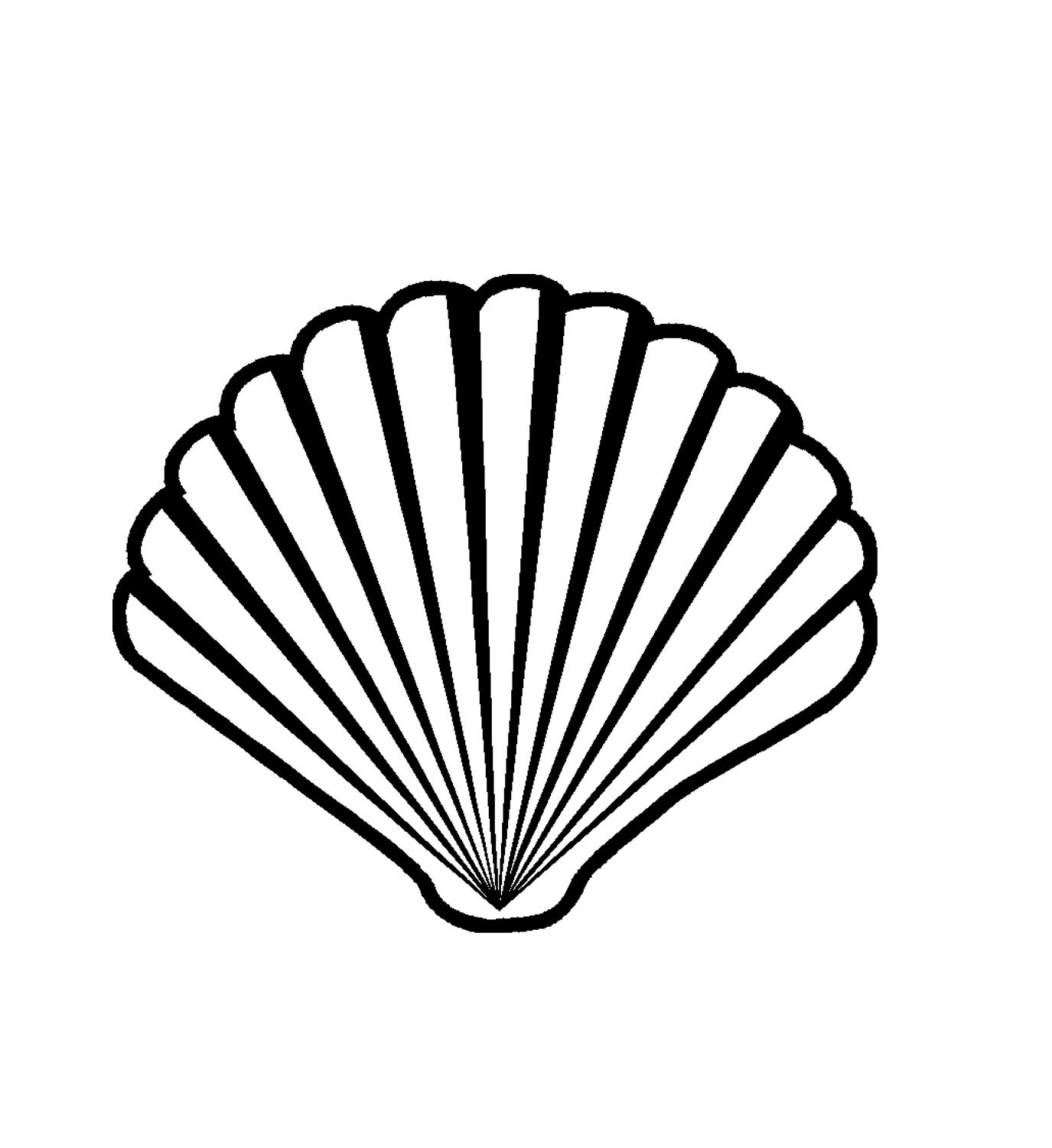 Scallop shell love pinterest scallop shells and tattoo scallop shell biocorpaavc Image collections