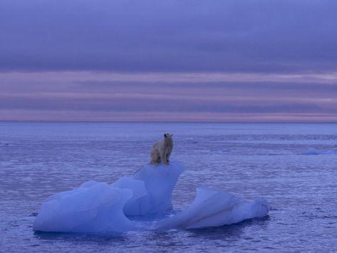 Polar Bear Standing Atop an Iceberg at Twilight Photographic Print by Norbert Rosing at Art.com