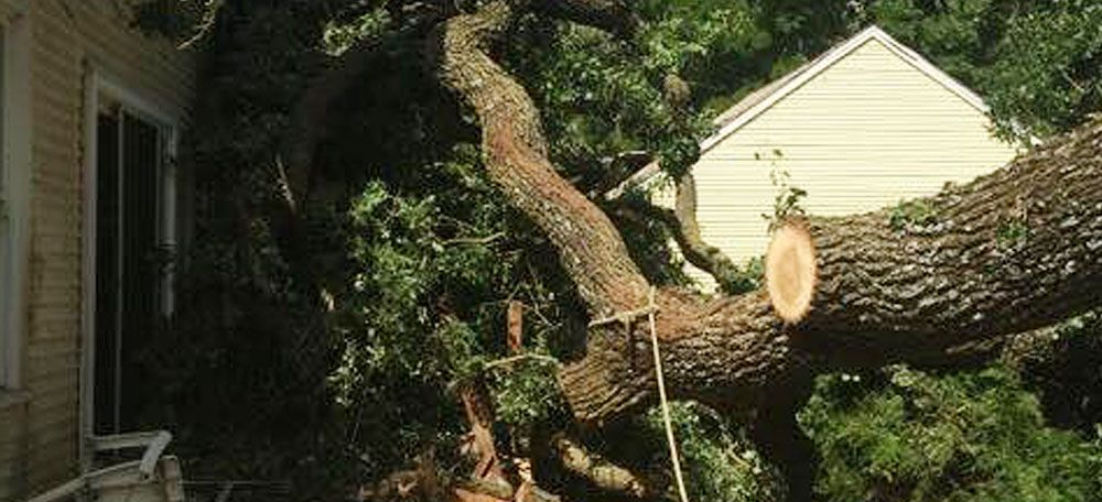 Pin on emergency tree removal services