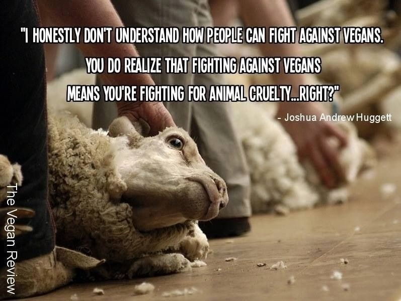 How should I set up my outline for my topic on Animal Fighting?