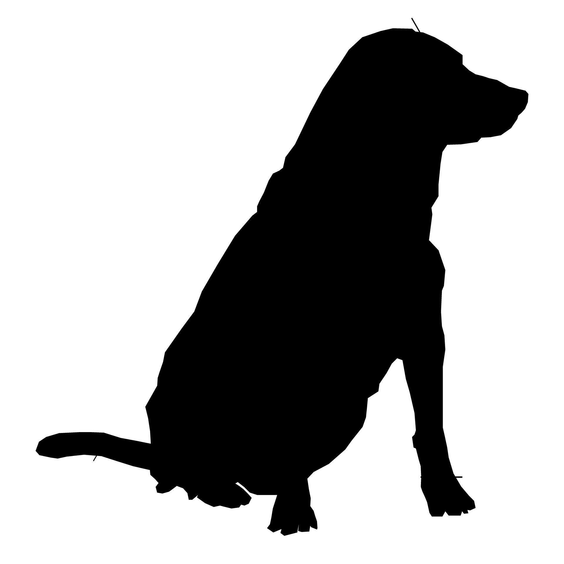 hond tekening google zoeken