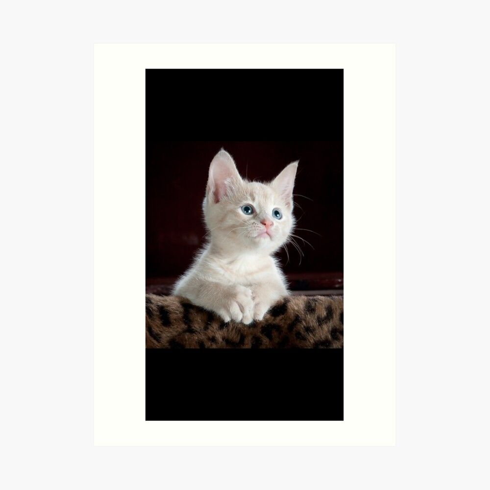 Absolute Adorable Cute Blue Eyed Kitty Kitten Art Print By Mr Clothing In 2020 Kitten Art Kitten Kitty