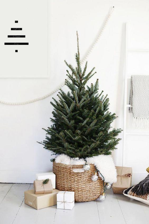 Christmas Wallpaper Reindeer Live Potted Christmas Trees Near Me. | Wakacje, Choinki i Dekoracje ...