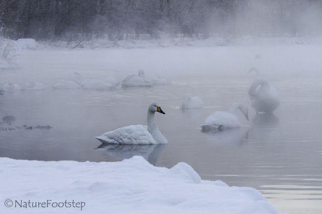 NatureFootsteps Travels: Japan 160201 Lake Kussharo to the fishing village Rausu
