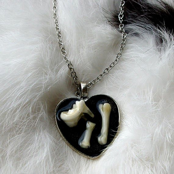 Raccoon Tooth and Toe Bone Necklace