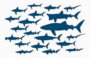 248beeb0c4eb3 Free Vector File - 20 Shark Silhouettes | Scuba | Shark silhouette ...
