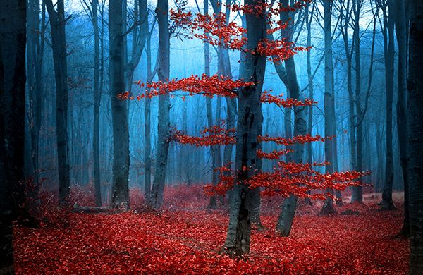 Red Forest Wall Mural
