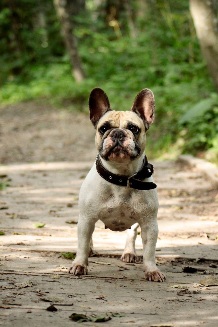 Zungenkuss hund