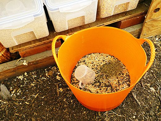 Homemade Whole Grain Chicken Feed Recipe Chicken Feed