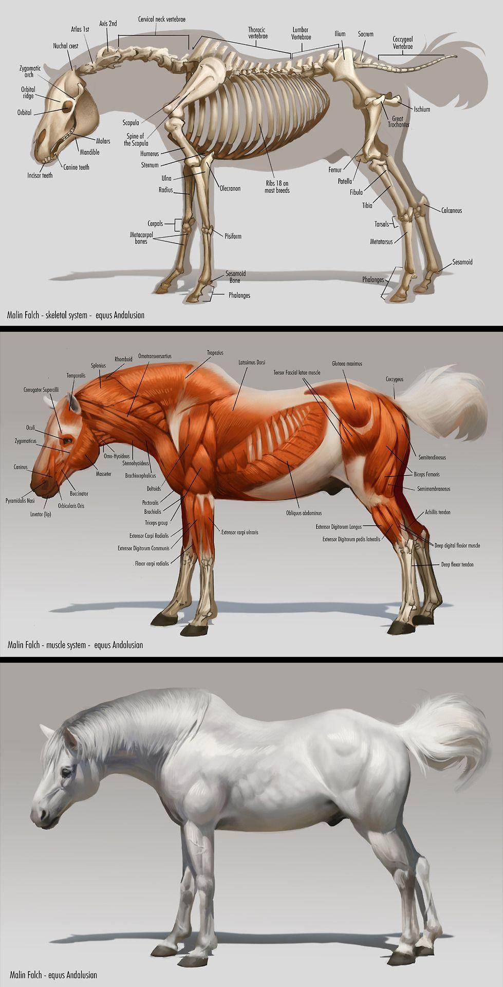 Malin Falch : Photo | Equinos | Pinterest | Pferde, Pferde zeichnen ...