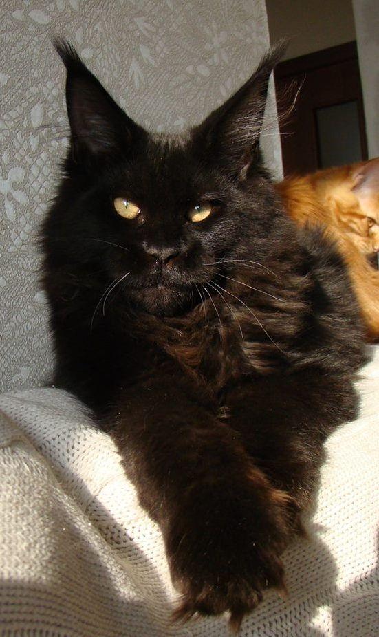 Weiße Katze Schwarzer Kater