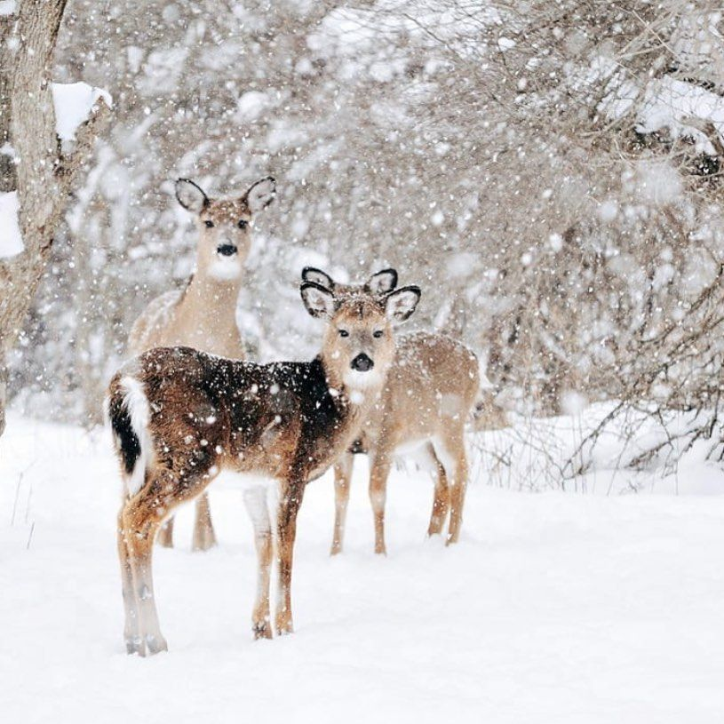 """Photo of Autumn & Winter Fantasies ❄🎄🦌🧣 on Instagram: """"Are you a nature person? 🦌🍃🐾"""""""