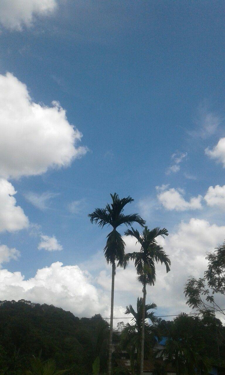 Langit biru Langit, Biru, Pohon
