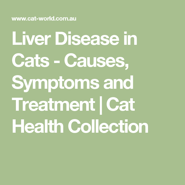 Liver Disease in Cats - Causes, Symptoms and Treatment   Cat Health Collection