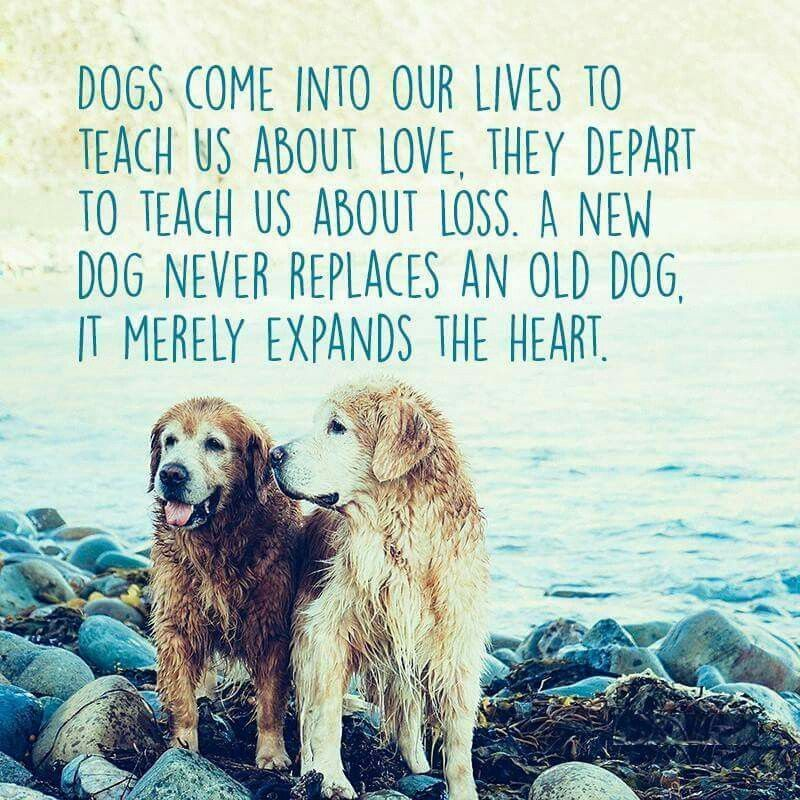 Only Dog Lovers Will Understand Doglovers Dogstories Dog Quotes