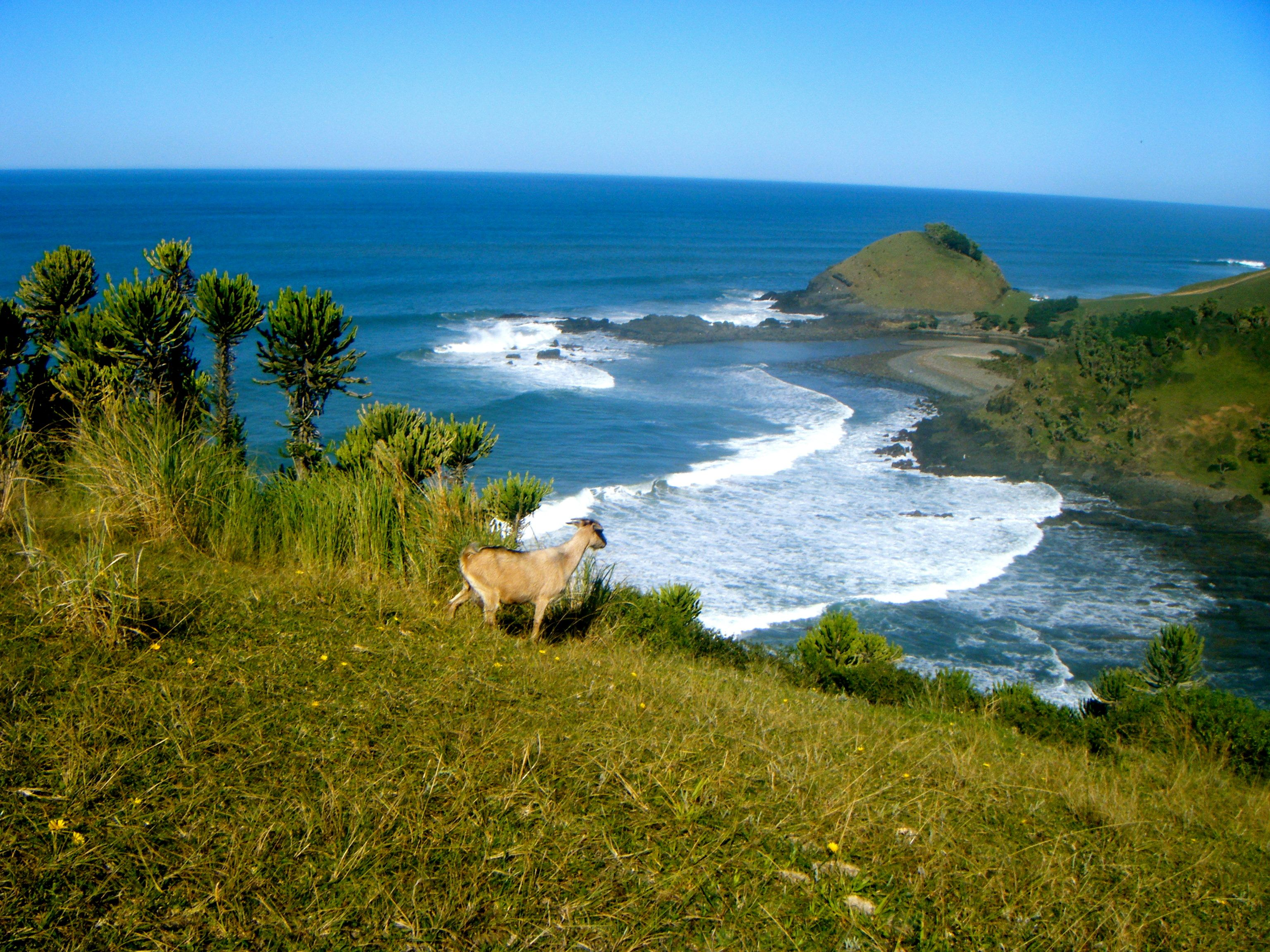 coffee bay south africa africa places to go south africa on hole in the wall rock formation eastern cape id=55587