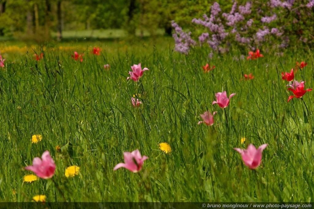 Spring and tulips - 17 -