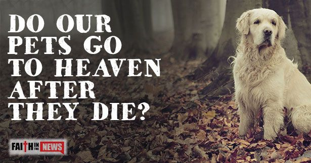 Do Our Pets Go To Heaven After They Die Pets, Heaven