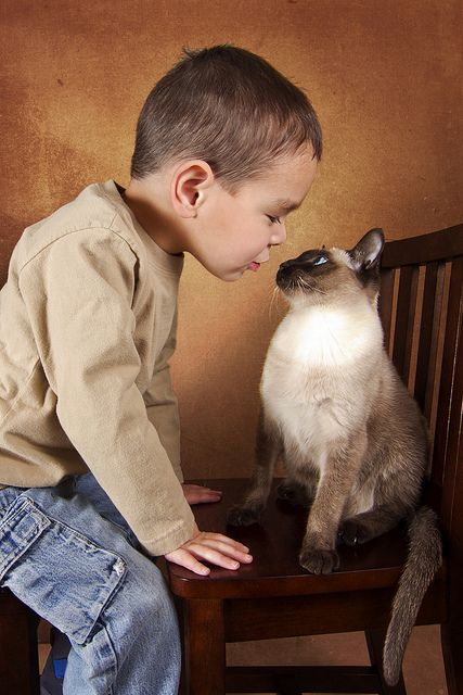 I dont know why...but Iove siamese cats...they seem so personable like a dog. :-)