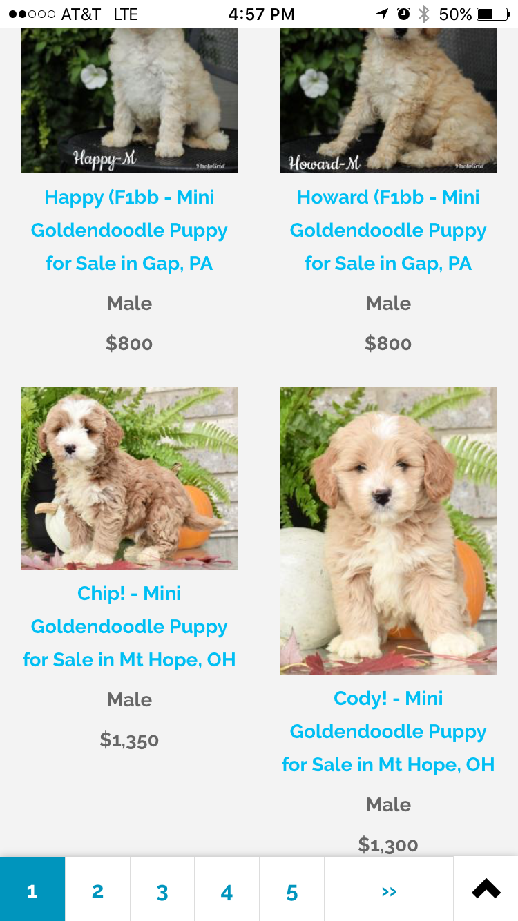 Pin By Mindy Pool On Doodles Goldendoodle Puppy Mini Goldendoodle Puppies Goldendoodle Puppy For Sale